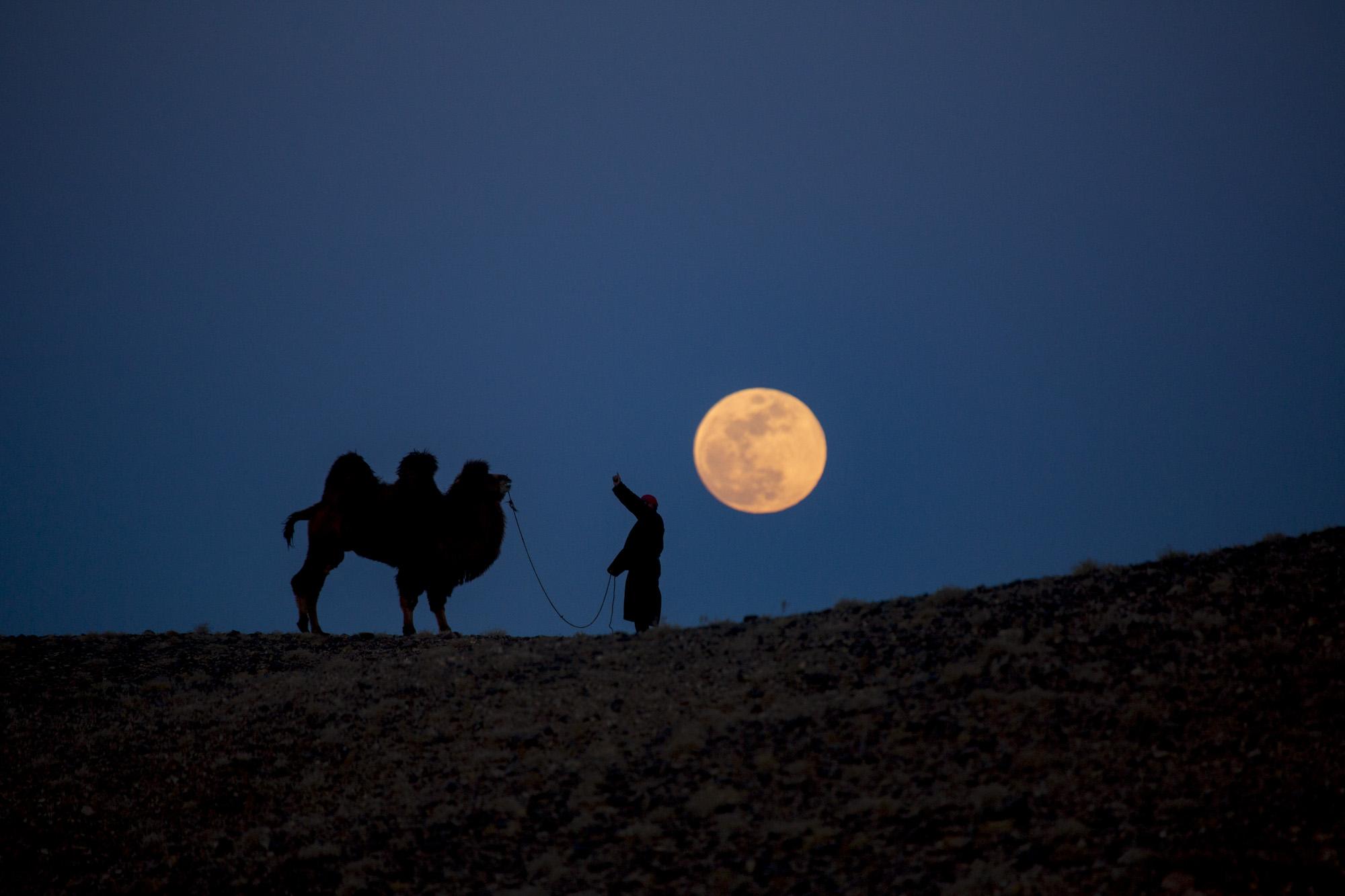 Kamel mit Vollmond